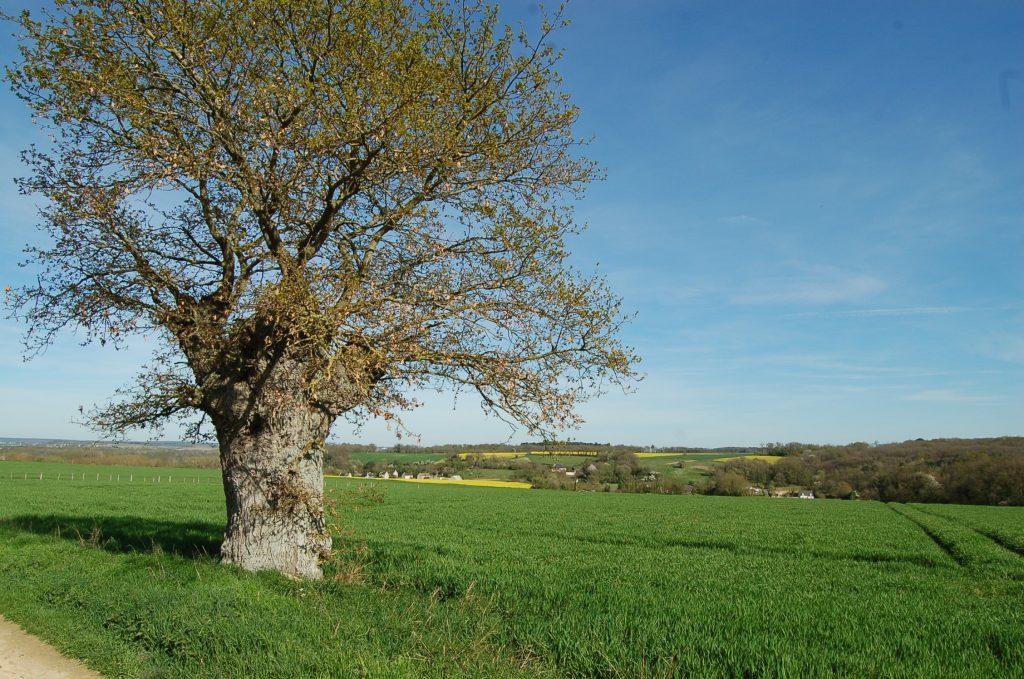 Plantation d arbres cpie touraine val de loire - Plantation d arbres synonyme ...